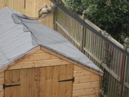 Challenges When Installing A Secur A Cat Garden Cat